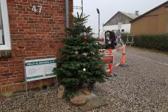 6.20-juletræ-på-plads